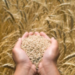 This Week on the Eat Right Idaho Blog: Wheat Variety to Jazz Up Your Life