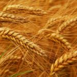 This Week on the Eat Right Idaho Blog: Celebrating Whole Grains Month